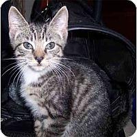 Adopt A Pet :: Alex Tile - Alexandria, VA