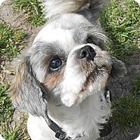 Adopt A Pet :: Chance - Lockhart, TX