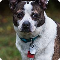 Adopt A Pet :: Monty - Greensboro, NC