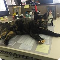 Adopt A Pet :: Tootsie (loves kids) - Sterling Hgts, MI