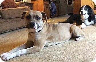 Boxer Mix Dog for adoption in Richmond, Virginia - SOLEIL