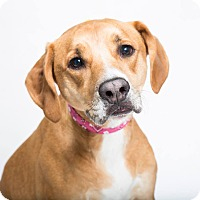 Adopt A Pet :: Ginger - PENDING - in Maine - kennebunkport, ME