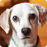 Adopt A Pet :: Murphy - Romeoville, IL