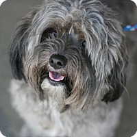 Adopt A Pet :: Teddie - Canoga Park, CA