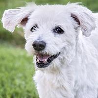Adopt A Pet :: Mariam - El Cajon, CA