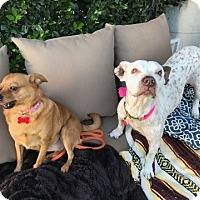 Adopt A Pet :: Mae is BOMBPROOF - Los Angeles, CA