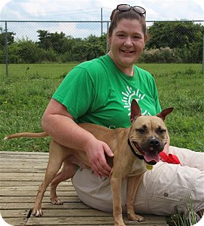 American Pit Bull Terrier Mix Dog for adoption in Elyria, Ohio - Louisa