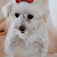 Adopt A Pet :: Devon - Pueblo, CO
