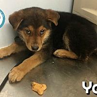 Adopt A Pet :: Yale - Kimberton, PA