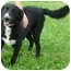 Photo 2 - Border Collie Mix Dog for adoption in Somerset, Pennsylvania - Sparky