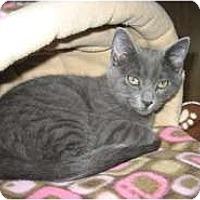 Adopt A Pet :: Jasper - Shelton, WA