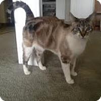 Adopt A Pet :: Baby Cat - Modesto, CA