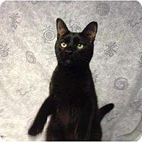 Adopt A Pet :: Zoro - Orlando, FL