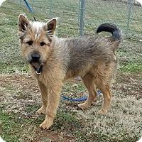 Adopt A Pet :: Oscar - Franklin, KY