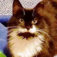 Adopt A Pet :: Destiny - Gettysburg, PA