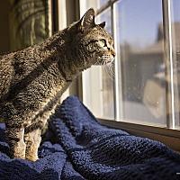 Adopt A Pet :: Macy - Manhattan, KS