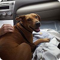 Adopt A Pet :: lucy - loxahatchee, FL