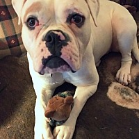 Adopt A Pet :: Charlee *URGT IMMED FOSTER HOME NEEDED - Staten Island, NY