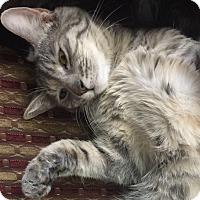 Adopt A Pet :: Lizzie - Temecula, CA