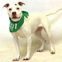 Adopt A Pet :: QUEENIE - Sanford, FL