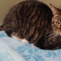Adopt A Pet :: Ruby - Clearfield, PA