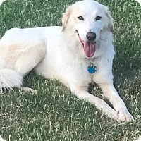 Adopt A Pet :: Stevie - Kiowa, OK