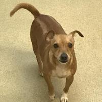 Adopt A Pet :: Catalina - Miami, FL