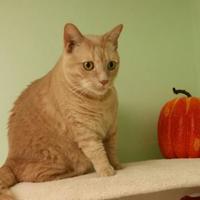 Adopt A Pet :: Rocky - Canastota, NY