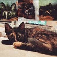 Adopt A Pet :: Eloise - McHenry, IL