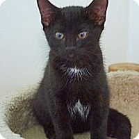 Adopt A Pet :: Panther - Victor, NY