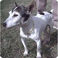 Adopt A Pet :: RANDY - Phoenix, AZ