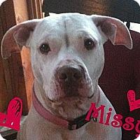 Adopt A Pet :: Missy - Georgetown, KY