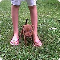Adopt A Pet :: Female3 - Roaring Spring, PA