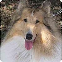Adopt A Pet :: Sandy - Gardena, CA