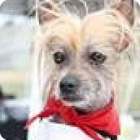Adopt A Pet :: Zeus - Hilliard, OH