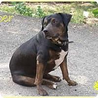 Adopt A Pet :: *Piper* - Hancock, MI