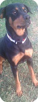 Rottweiler Dog for adoption in McAllen, Texas - Reba