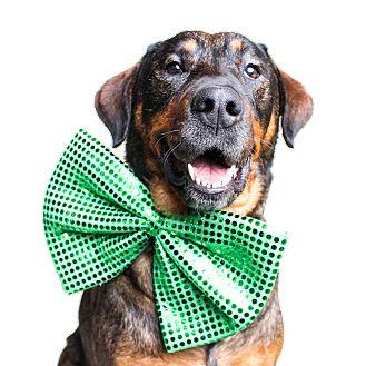 Shepherd (Unknown Type)/Rottweiler Mix Dog for adoption in Wilmington, Delaware - Zelda