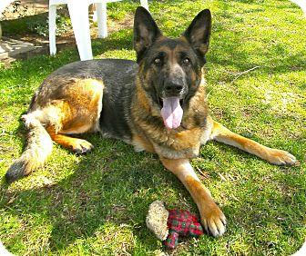 German Shepherd Dog Dog for adoption in El Cajon, California - Sasha