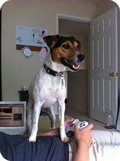 Terrier (Unknown Type, Medium) Dog for adoption in Point Pleasant, Pennsylvania - SYDNEY-PENDING