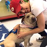 Adopt A Pet :: Victor - Scottsdale, AZ