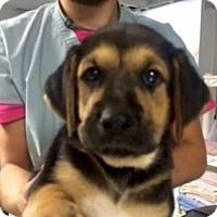 Adopt A Pet :: Eaton - Barnegat, NJ