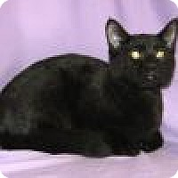 Adopt A Pet :: Ebony - Powell, OH