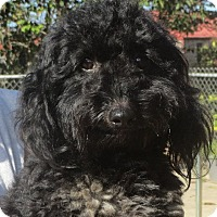 Adopt A Pet :: Nevil - Greenville, RI