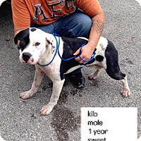 Adopt A Pet :: Kilo*ADOPTED!* - Chicago, IL
