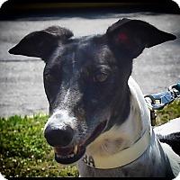 Adopt A Pet :: KB'S MIRIMBA - Sarasota, FL