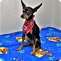Adopt A Pet :: Lucy - Tavares, FL