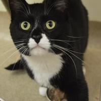 Adopt A Pet :: Bruiser - Oshkosh, WI