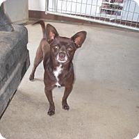 Adopt A Pet :: Coco - Buchanan Dam, TX
