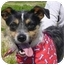Photo 1 - Terrier (Unknown Type, Small) Mix Dog for adoption in Portsmouth, Rhode Island - Mickey